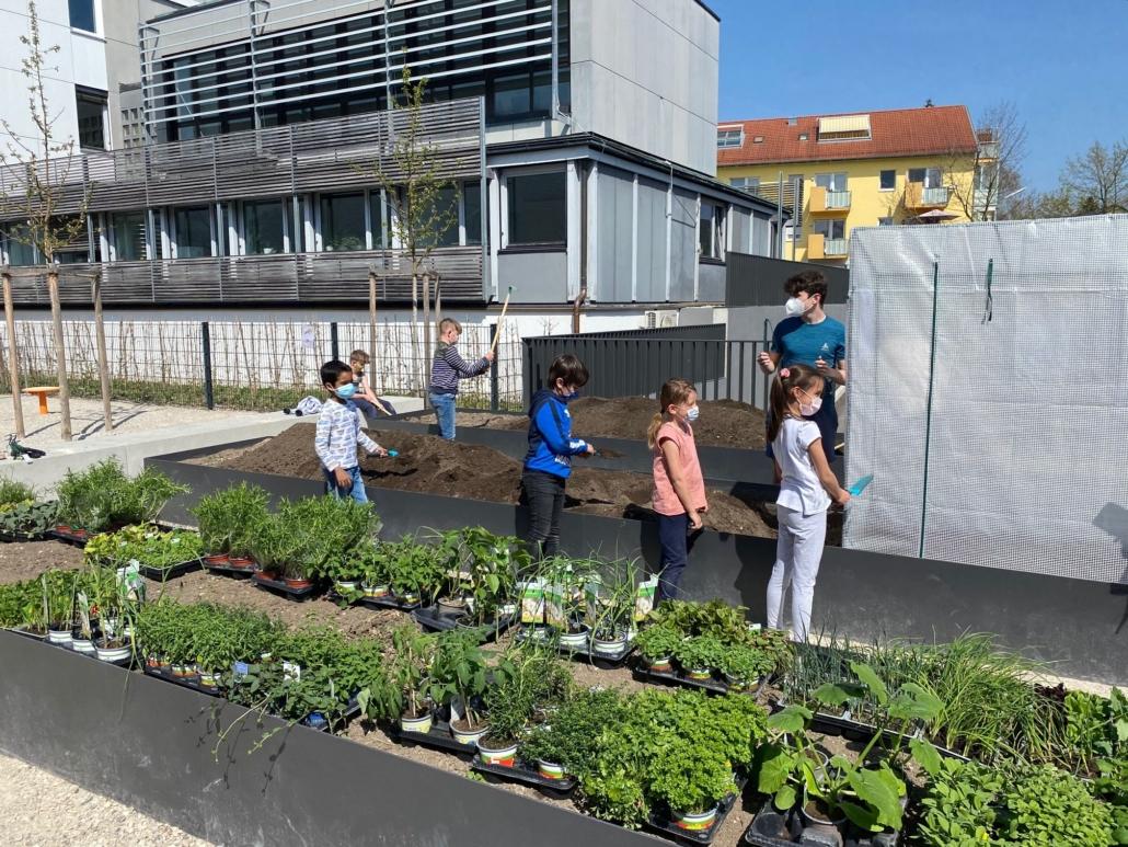 Schüler bepflanzen die neuen Beete
